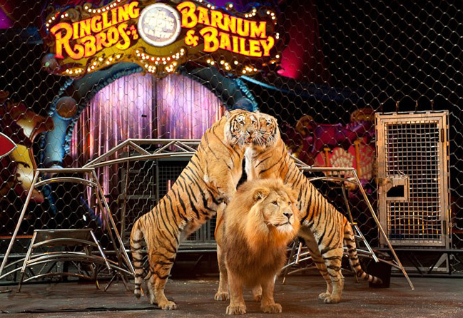 ringling brothers dragons