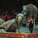 elephant in circus