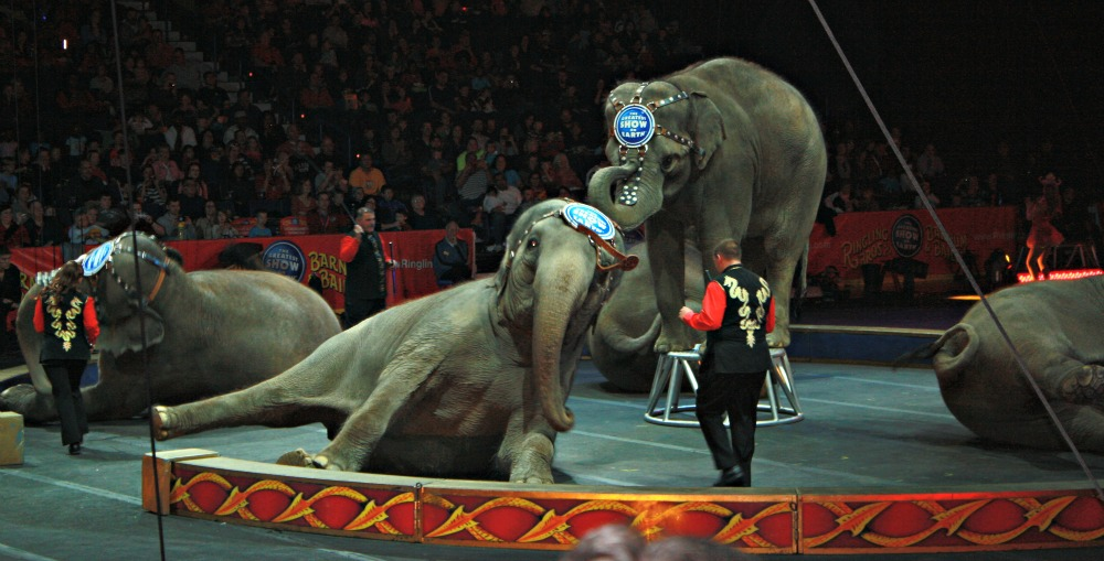 Ringling Brothers Presents…