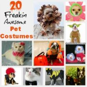Last Minute Pet Costumes