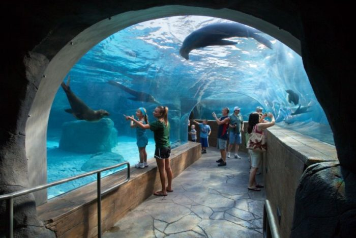 free st louis zoo