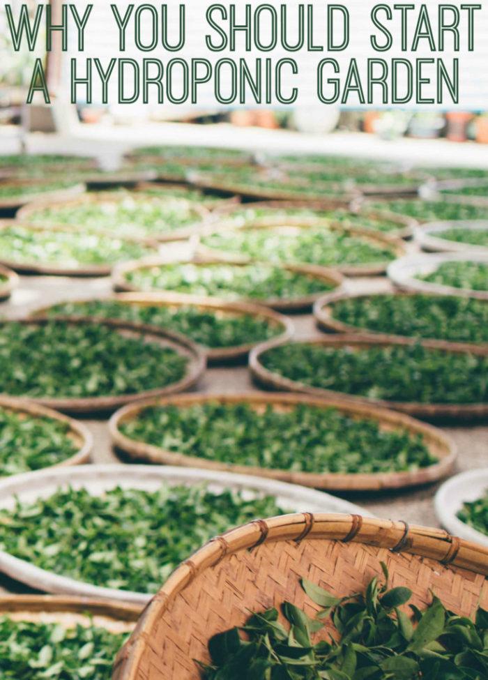 Benefits of Hydroponic Gardening