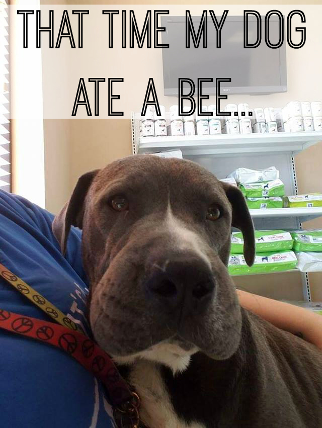 That Time My Dog Ate a Bee…