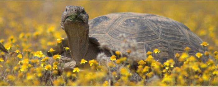 desert tortoise habitat tour
