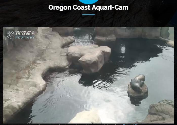 Oregon Coast Aquarium LIVE Cam