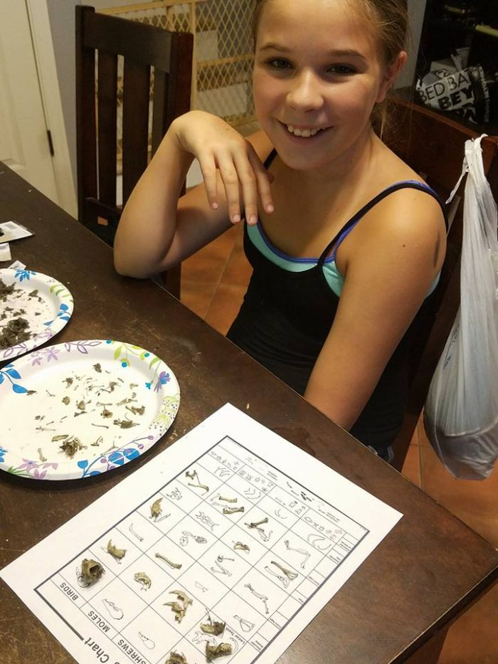 How To Dissect Owl Pellets Homeschool Project Slap Dash Mom