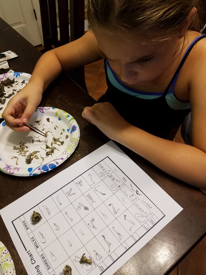 How to Dissect Owl Pellets: Homeschool Project
