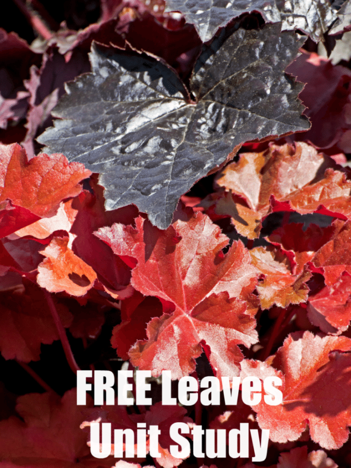 FREE Leaves Unit Study Resources