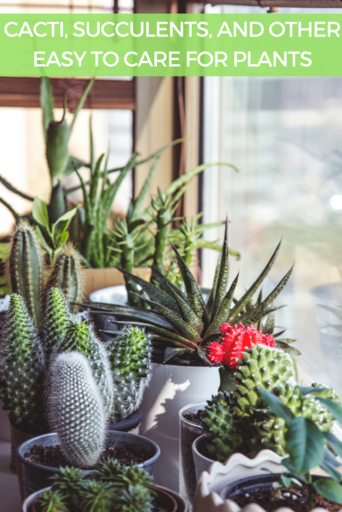 Cacti, Succulents and other Easy to Care for Plants